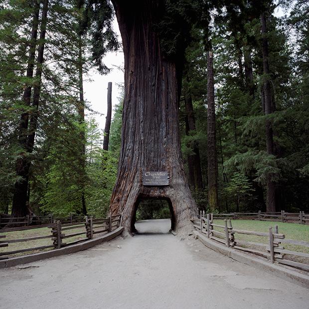 Photo du Jour: Drive-Thru Tree