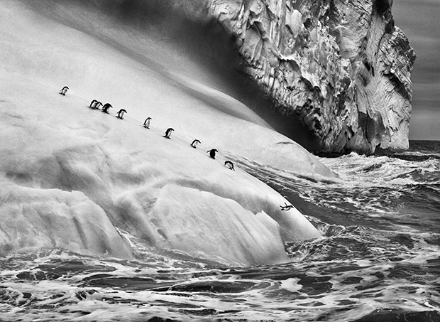 'Genesis' is Photographer Sebastião Salgado's 'Love Letter to the Planet'