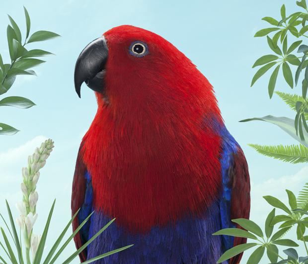 BIRDS Zack Seckler 04