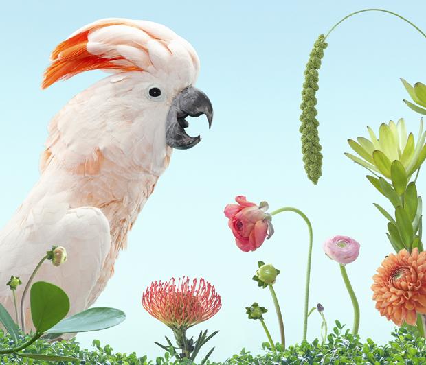BIRDS Zack Seckler 06