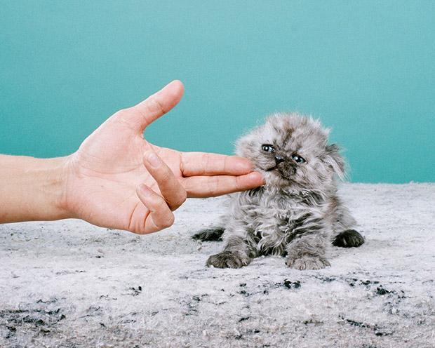 Jamie_Campbell_Saddest-Kitten-2012_001