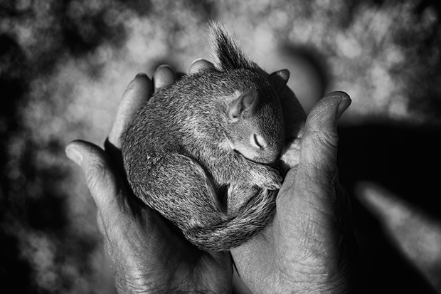 Photo du Jour: A Tale of Two Baby Squirrels