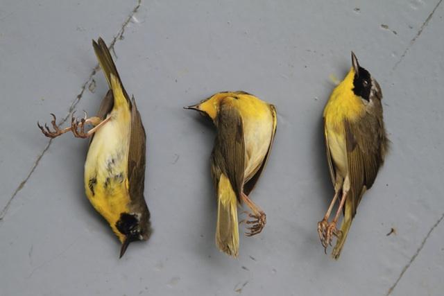 Tragic Images Aim to Raise Awareness About Bird Fatalities