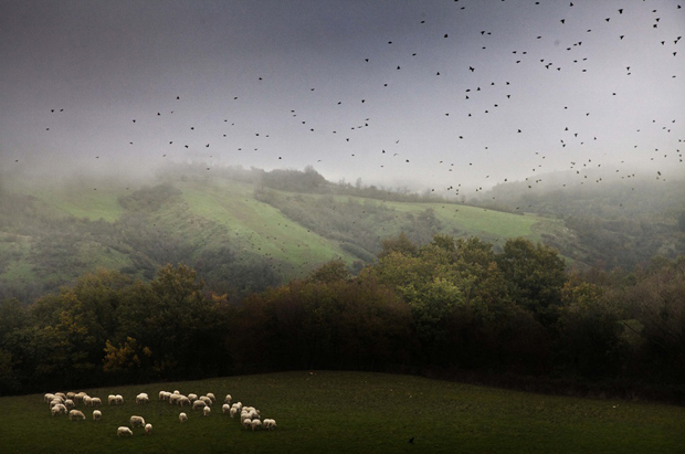Idyllic Photos of a Shepherd's Everyday Life