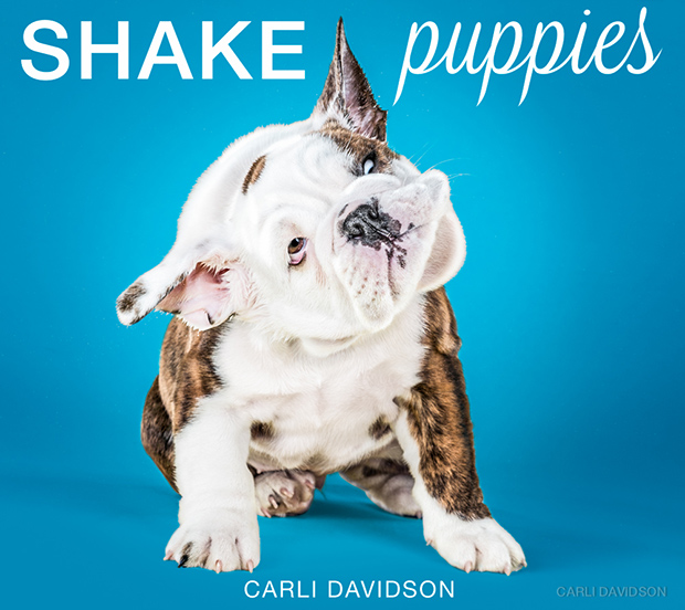 Shake-Puppies-Cover
