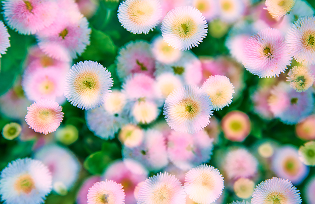 Enchanting, Impressionistic Photos of Flowers From Claude Monet's Garden in Giverny, France