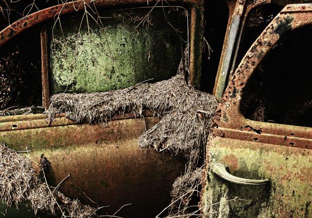 'Forest Punk': Photographer Hunts Down Abandoned Vintage ...
