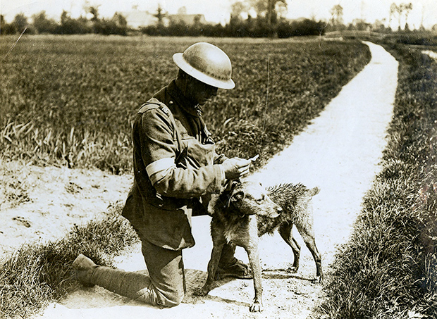 Vintage Photos Remember the Dogs of the First World War