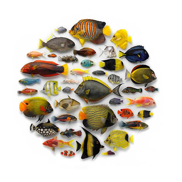 Tropical-Fish-Mosaic