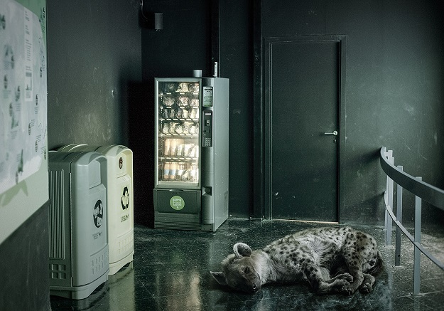 Wild in the City: Unsettling Photos Show Zoo Animals in Urban Environments