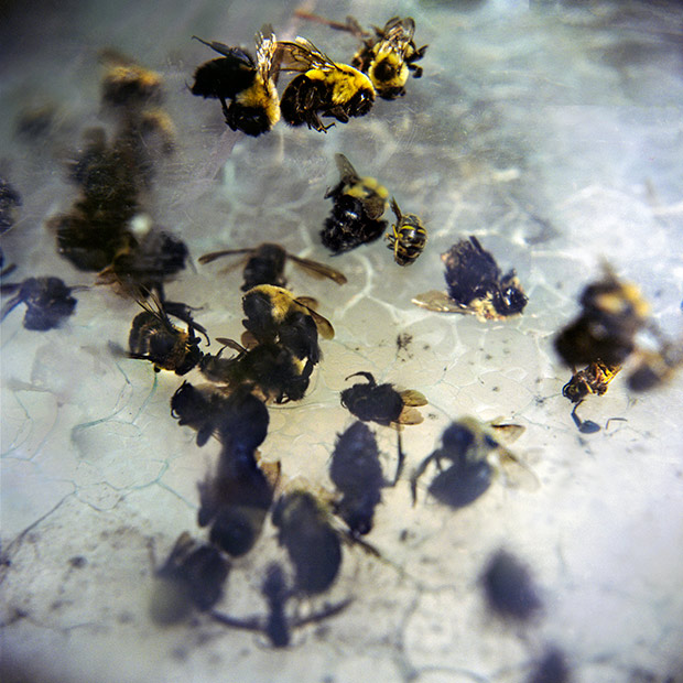 13_bees
