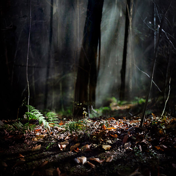 18_forest