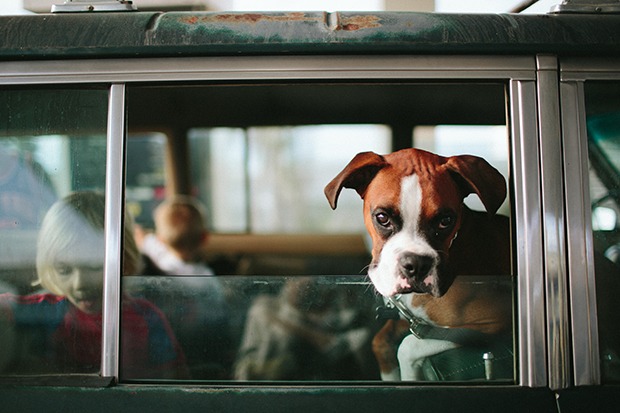 Dogs_In_Cars_156151