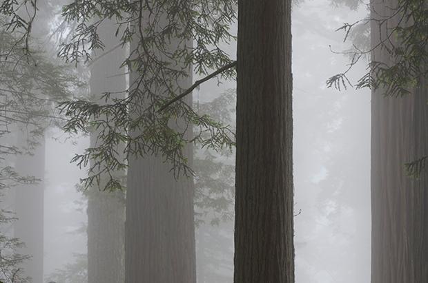 Fog_171521