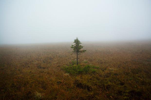 Fog_177896