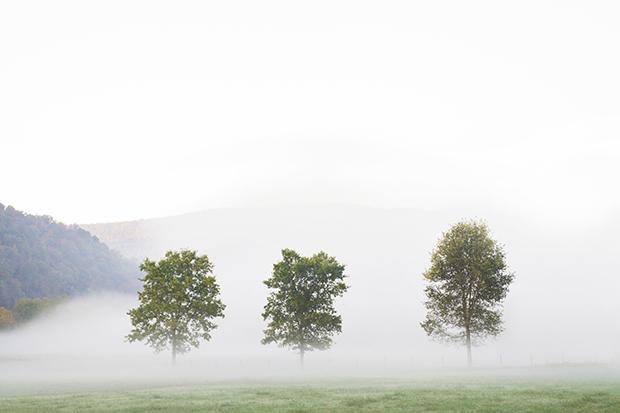 Fog_180203