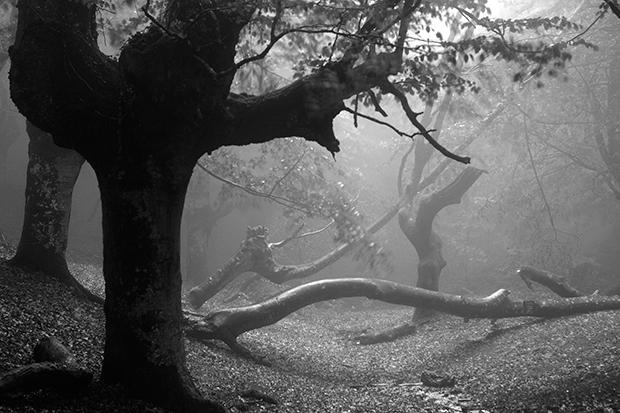 Fog_198244