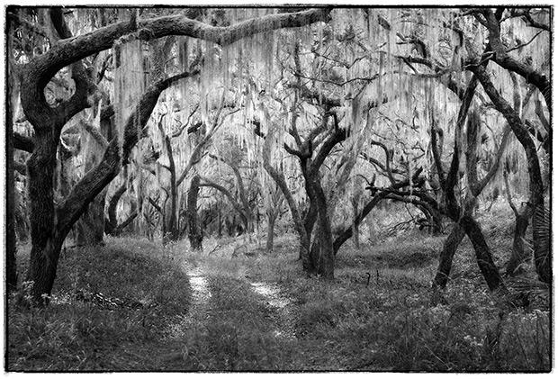 Woods_Road