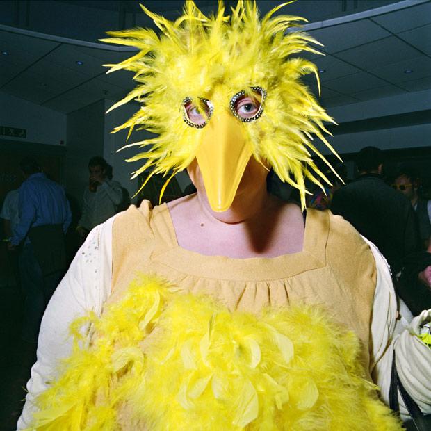 Bird,-2009