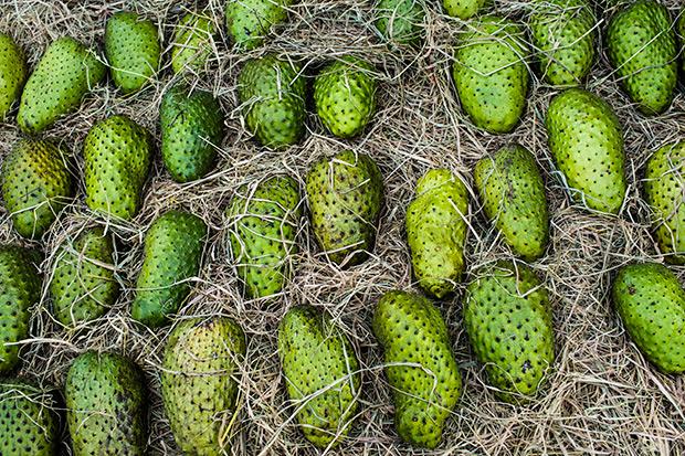 Fruit_214410