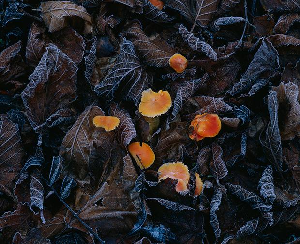 Mushrooms_173699