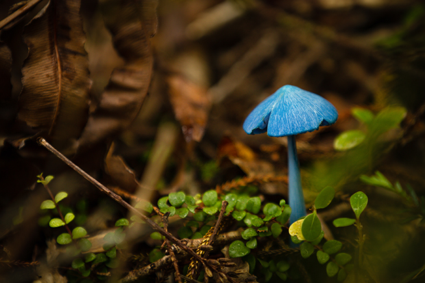 Mushrooms_82620