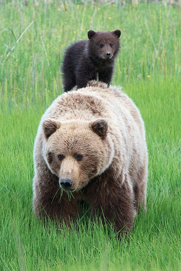 baby_animals_107236