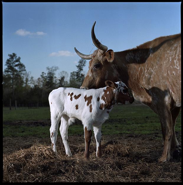 baby_animals_108140