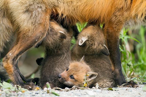 baby_animals_140620