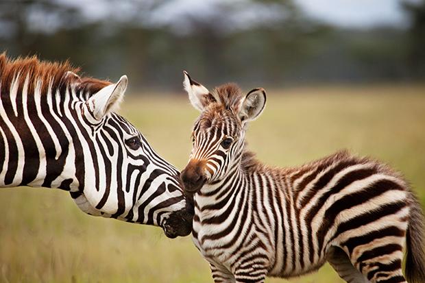baby_animals_176453