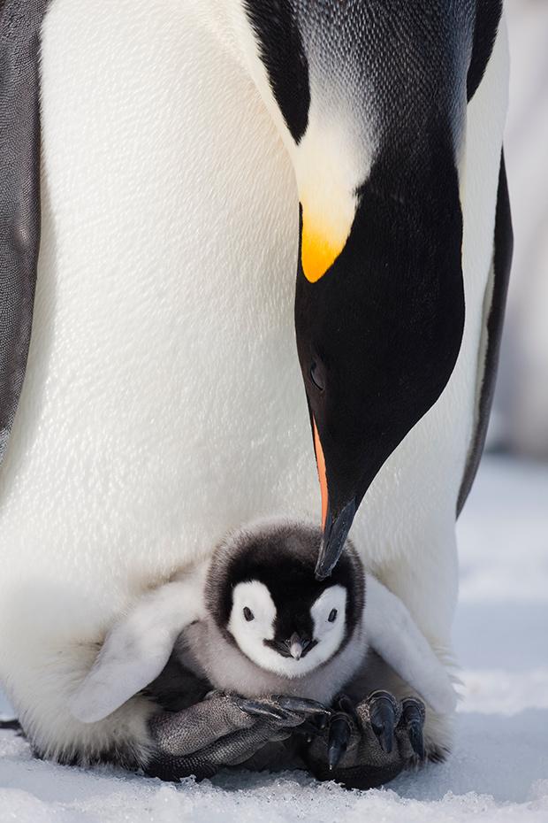 baby_animals_20721