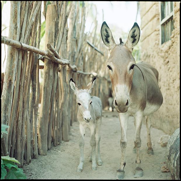 baby_animals_30717