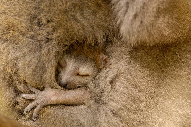 baby_animals_73168