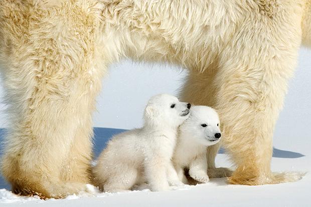 baby_animals_93557