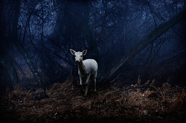 Deer_by_Sarah_Wilmer_for_Photoville