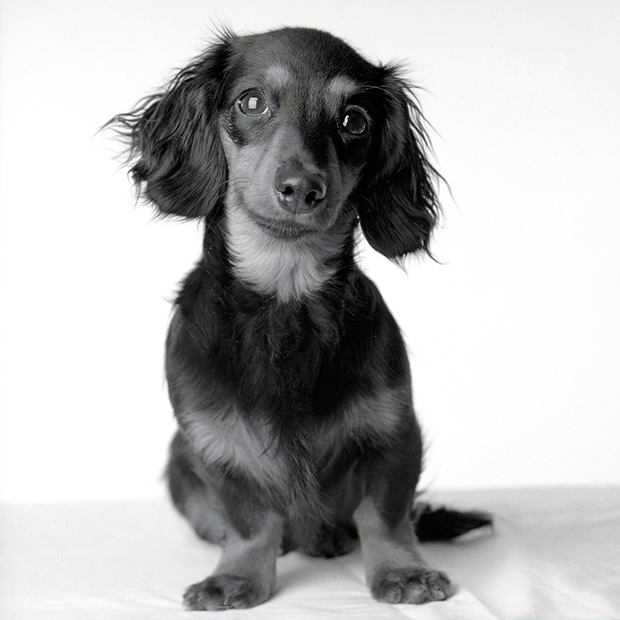 Touching Portraits of Dogs Taken Years Apart, from Puppyhood to Old Age