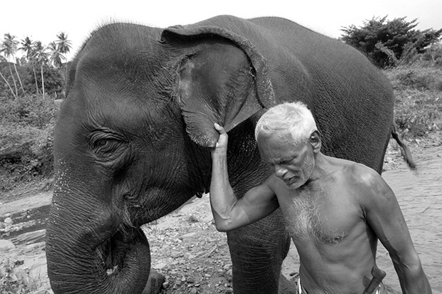 An Elderly mahout leads his elephant in Kandy in central Sri Lanka
