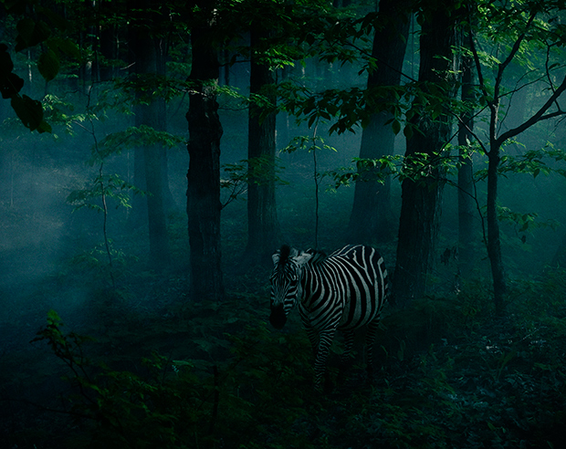 Zebra_by_Sarah_Wilmer_for_Photoville