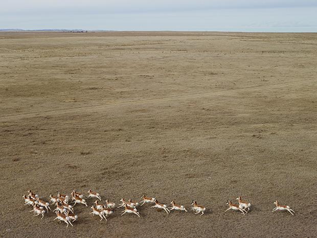FS_Antelope