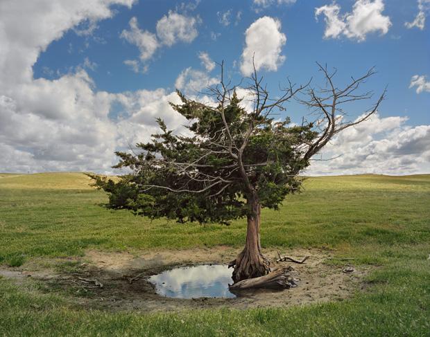 FS_Homesteaders_Tree