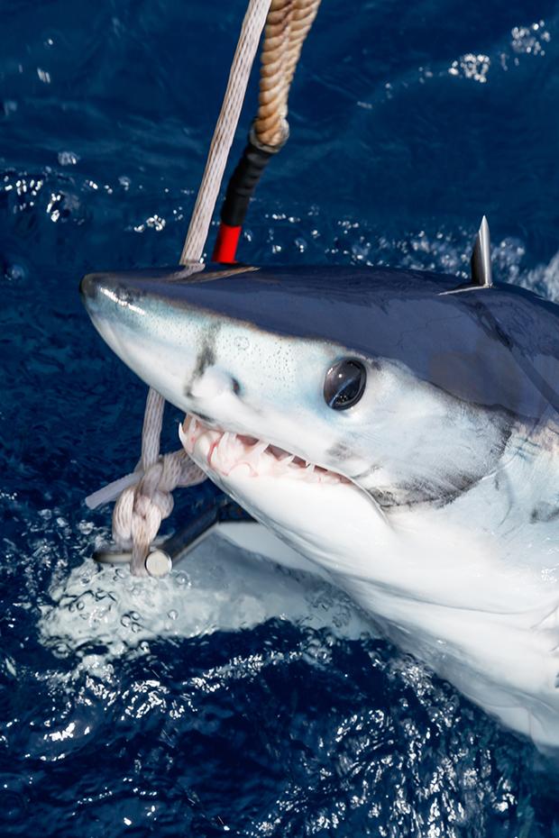 Gruesome Scenes from The Monster Shark Tournament