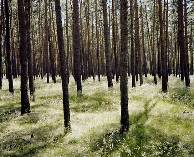 Wim Wenders, Forest in Brandenburg, 2014, Image courtesy the artist and BlainSouthern