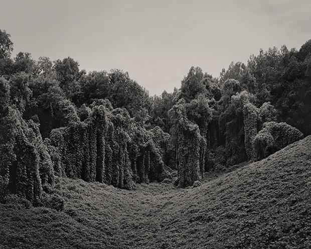 ©Alabama fields