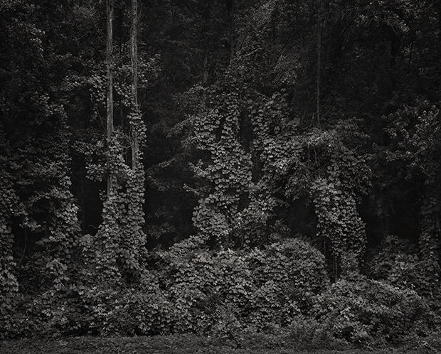 ©Georgian backyard