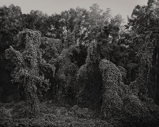 ©Southern landscape