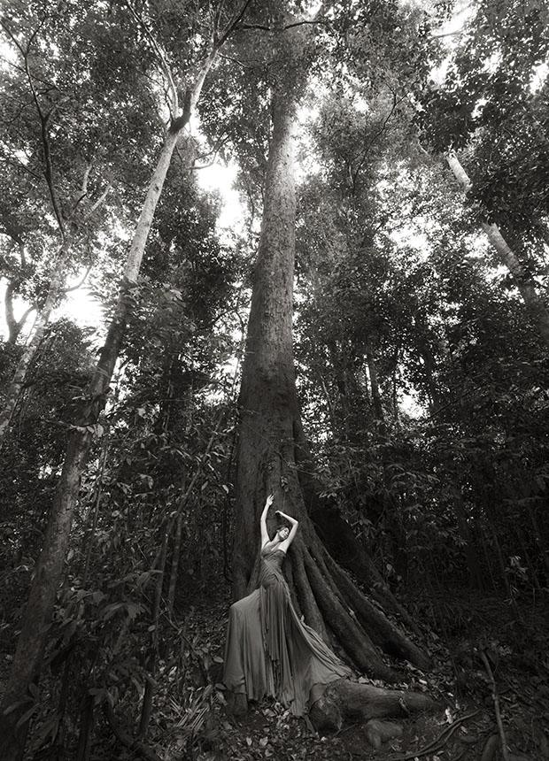 GaileLok_trees_(c)SeanLeeDavies_2015