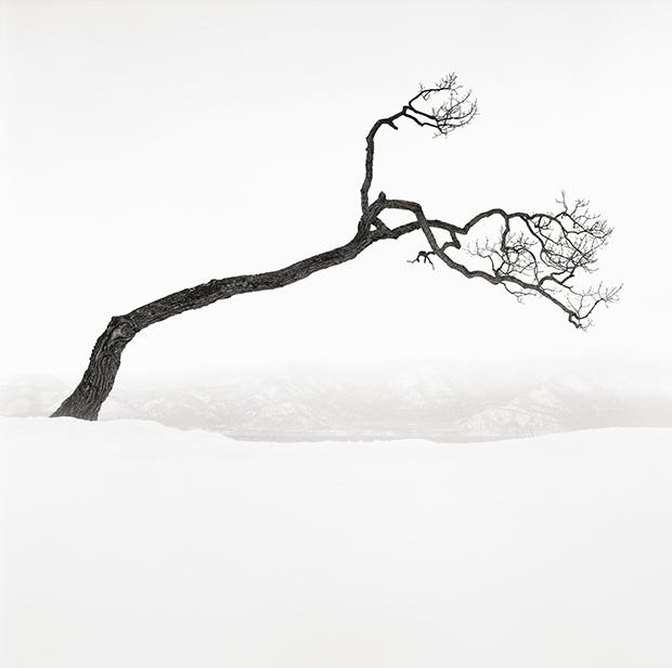 Kussharo Lake Tree, Study 9, Kotan, Hokkaido, 2009