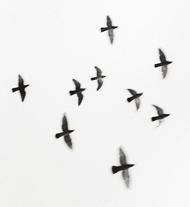 Nine Birds, Taisha Shrine, Honshu, 2001