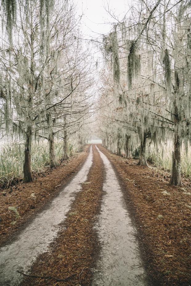 Cane  Syrup Harvest at Lavington Plantation in South Carolina's Lowcountry