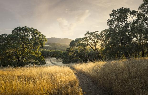 Sonoma Hiking Trail